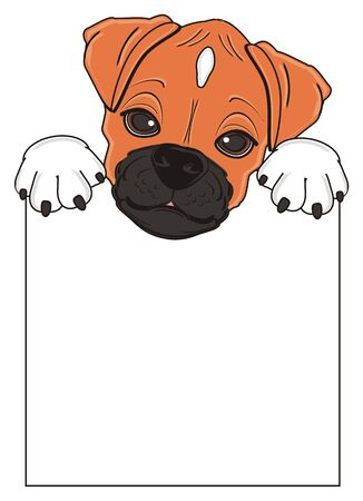 muzzle of boxer dog peek up from clean banner