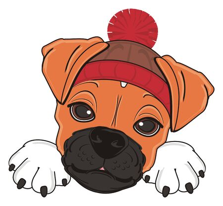 face of boxer dog in warm winter hat