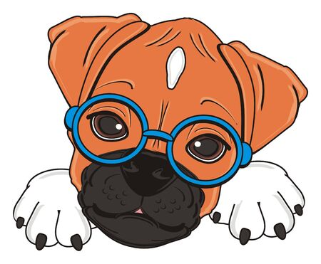 muzzle of boxer dog in blue round glasses Stock Photo