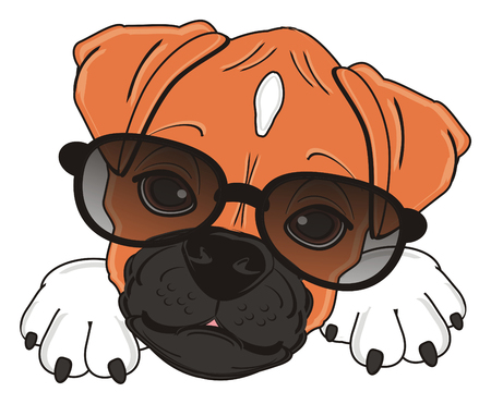 snout of boxer dog in black sunglasses