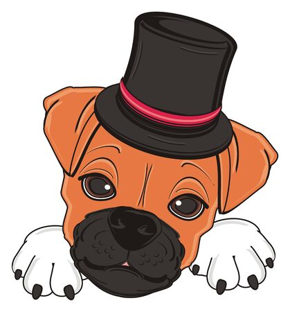 face of boxer dog in black cylinder hat Stock Photo