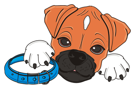 face of boxer dog with collar