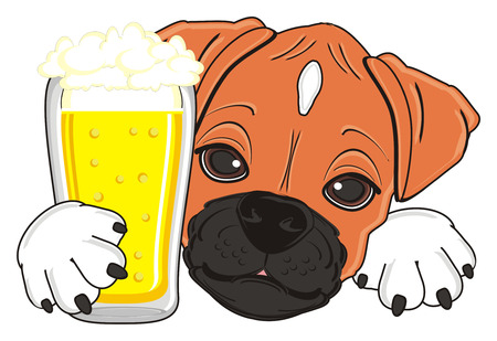 snout of boxer dog with drink Stock Photo