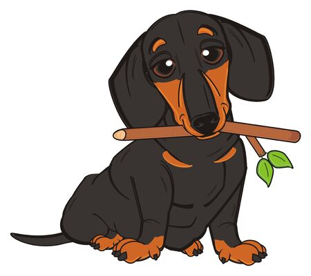 black duchshund sit and hold a branch