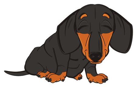 black dachshund sit with closed eyes