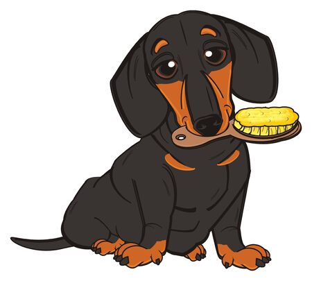 black dachshund sit and hold a wooden brash