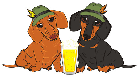 near beer: couple of dachshunds in hats sit near the glass of beer
