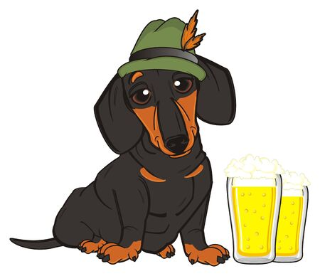 barking: dachshund in hat sit near the glasses of beers Stock Photo