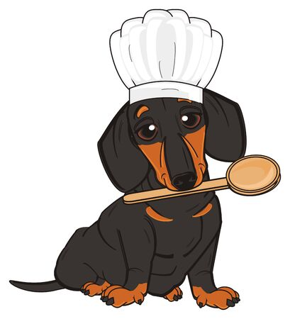 dachshund sit and ready to cooking