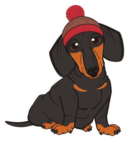 dachshund in winter hat sit