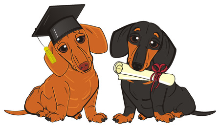 barking: two dachshunds sits and ready to study