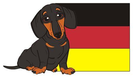 dachshund sit near the Germany flag