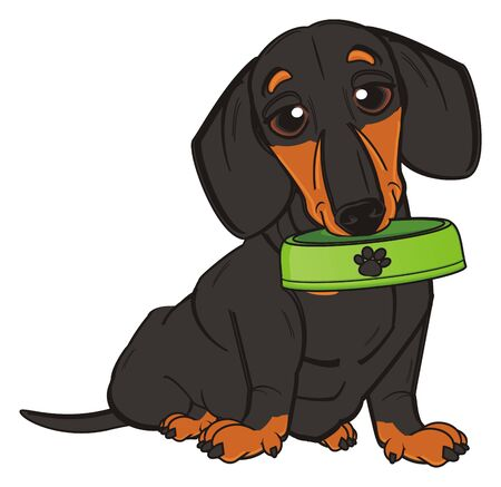 barking: dachshund sit and hold an empty bowl Stock Photo