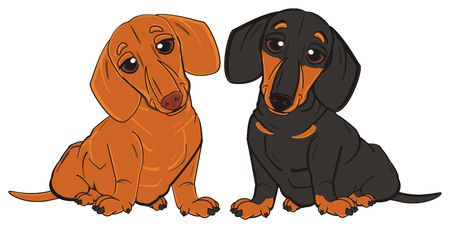 barking: different dachshunds sit Stock Photo
