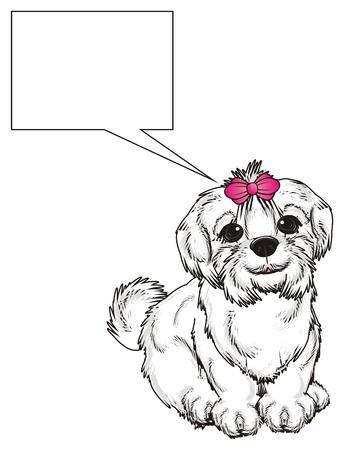 lapdog: Maltese lapdog sit and thinking