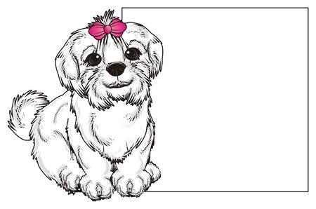 lapdog: Maltese lapdog sit near the clean paper Stock Photo