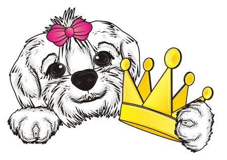 lapdog: snout of Maltese lapdog hold crown