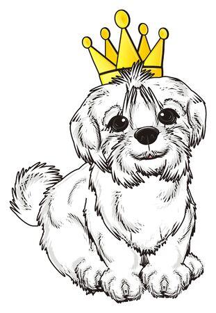 lapdog: Maltese lapdog with golden crown sit