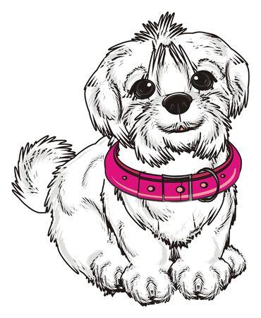 lapdog: Maltese lapdog with large pink collar sit Stock Photo