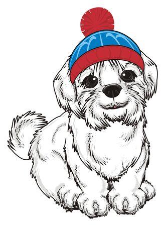 lapdog: Maltese lapdog in winter hat sit