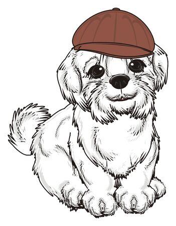 lapdog: Maltese lapdog in brown cap sit