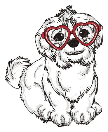 lapdog: Maltese lapdog with red glasses sit