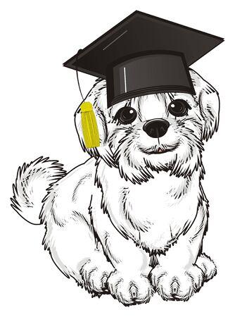 lapdog: Maltese lapdog in black hat sit Stock Photo
