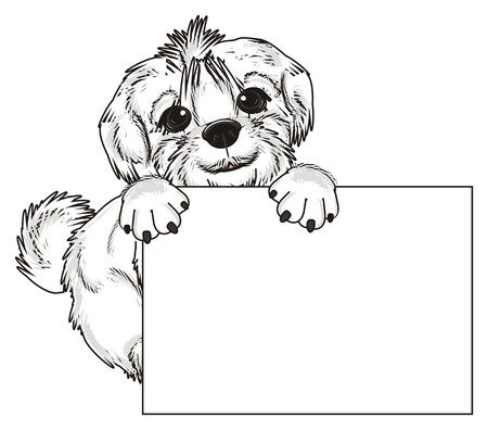 lapdog: Maltese lapdog peek up from clean paper Stock Photo