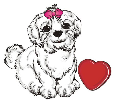 bark: Maltese lapdog sit with red heart