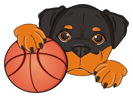 head of rottweiler with basketball