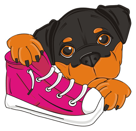 pink shoes: snout of rottweiler with pink shoes