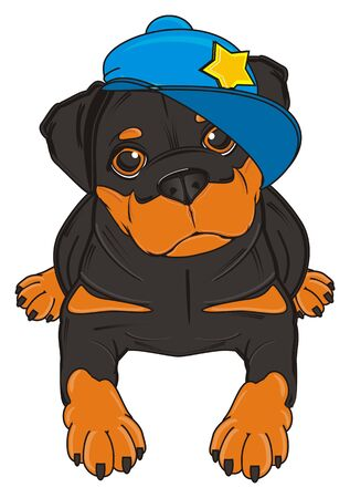lying in: rottweiler in blue cap lying