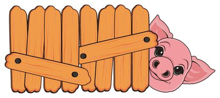 snout of pig peek up from wooden fence Stock Photo
