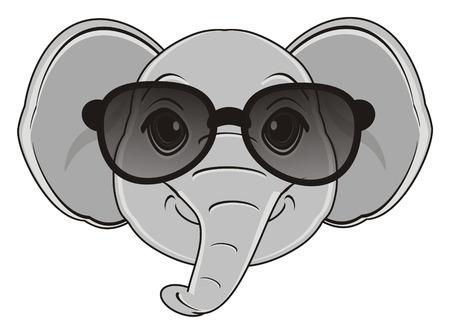 muzzle od elephant in black sunglasses