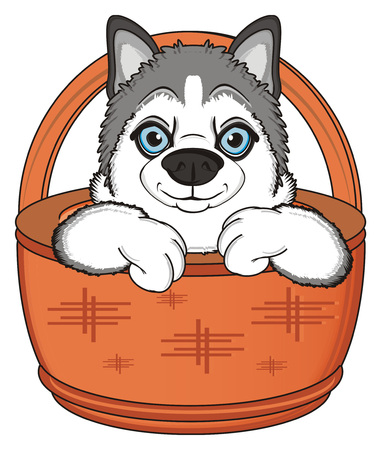 dog sled: muzzle of gray husky peek up from basket