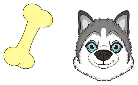 snout of husky with a bone Stock Photo