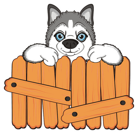 muzzle of gray husky peek up from wooden boards