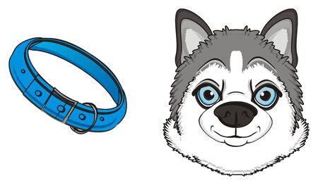 snout of gray husky with blue collar Stock Photo