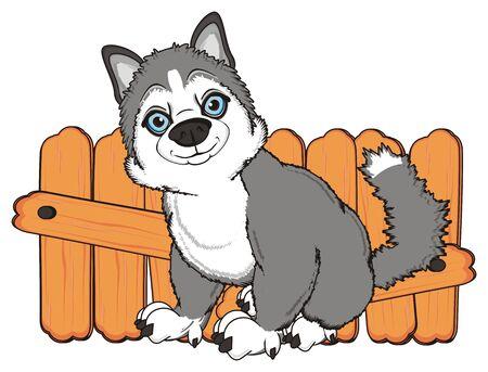 gray husky sit near the fence