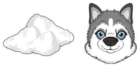 muzzle of gray husky with a sbnow
