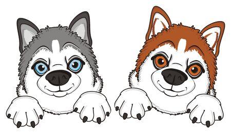 orange snout of husky with gray snout of husky