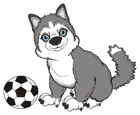 gray husky sit with soccer of ball