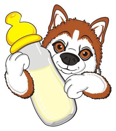 orange snout of husky with big bottle of milk Stock Photo