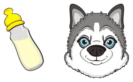face of gray husky with bottle of milk