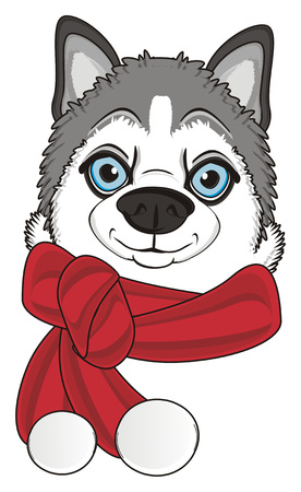 snout of gray husky in warm scarf