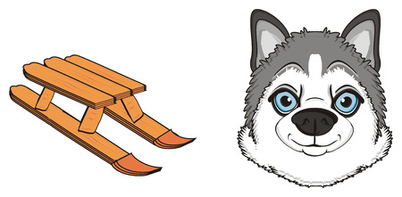 muzzle of gary husky with sled Stock Photo