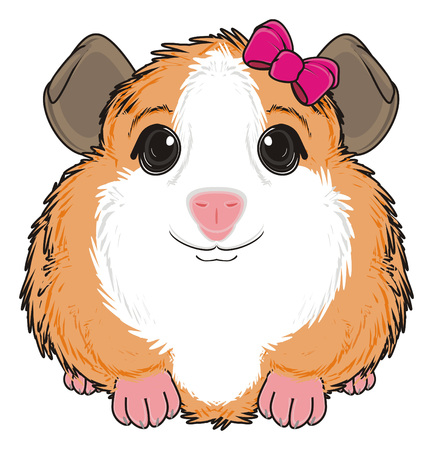 guinea pig girl with pink bow sit
