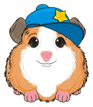 guinea pig in blue cap sit