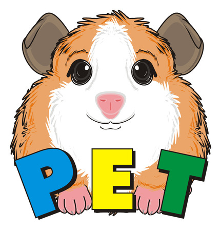guinea pig: guinea pig peek up from colored word pet
