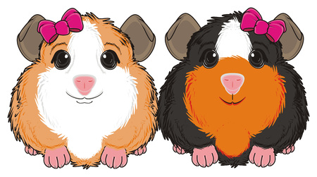 guinea pig: two guinea pigs girls with bows sit Stock Photo